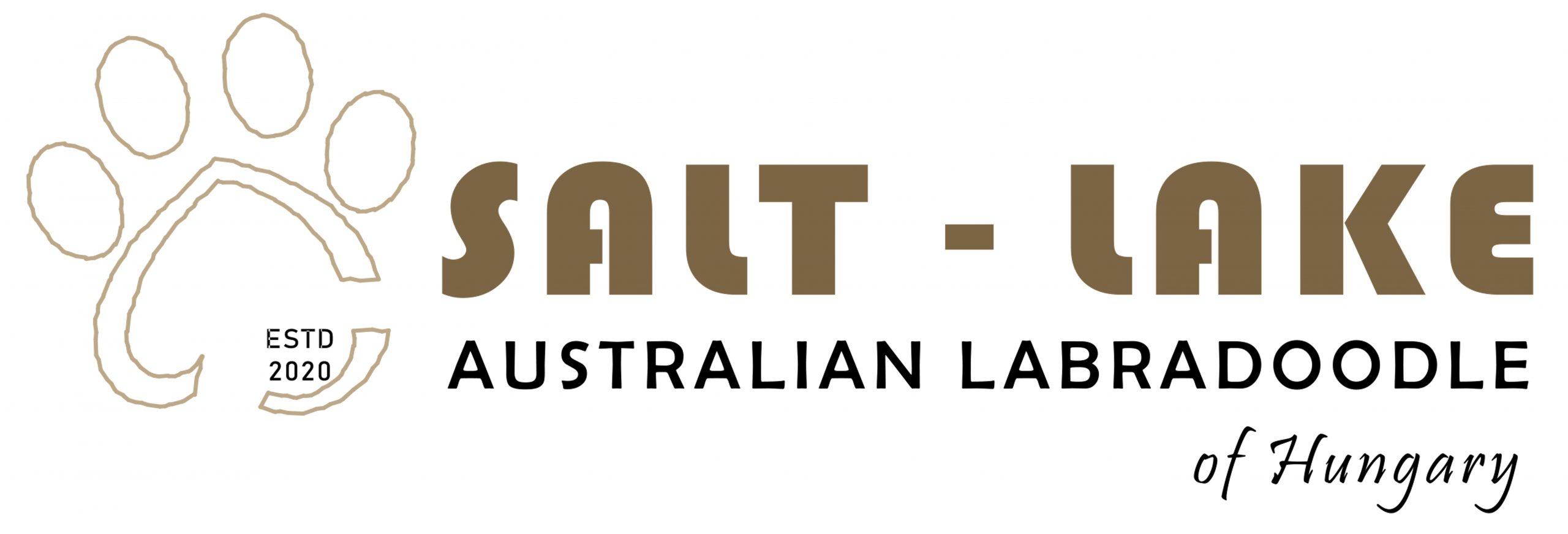 Salt-Lake Australian Labradoodle Magyarország